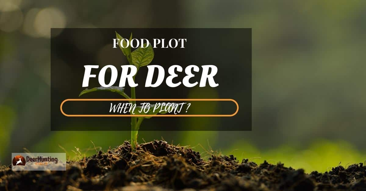 WHEN TO PLANT FOOD PLOT FOR DEER