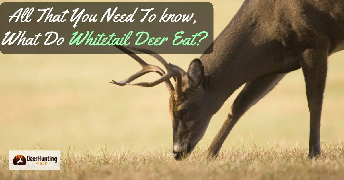 What do whitetail deer eat