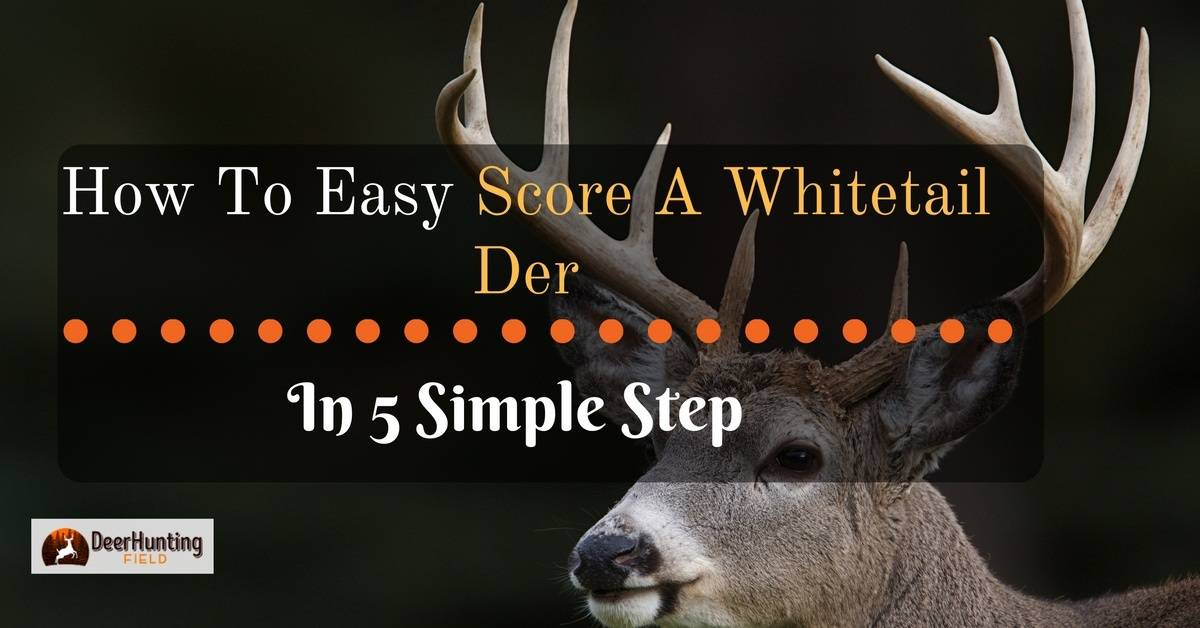 how to score a whitetail deer