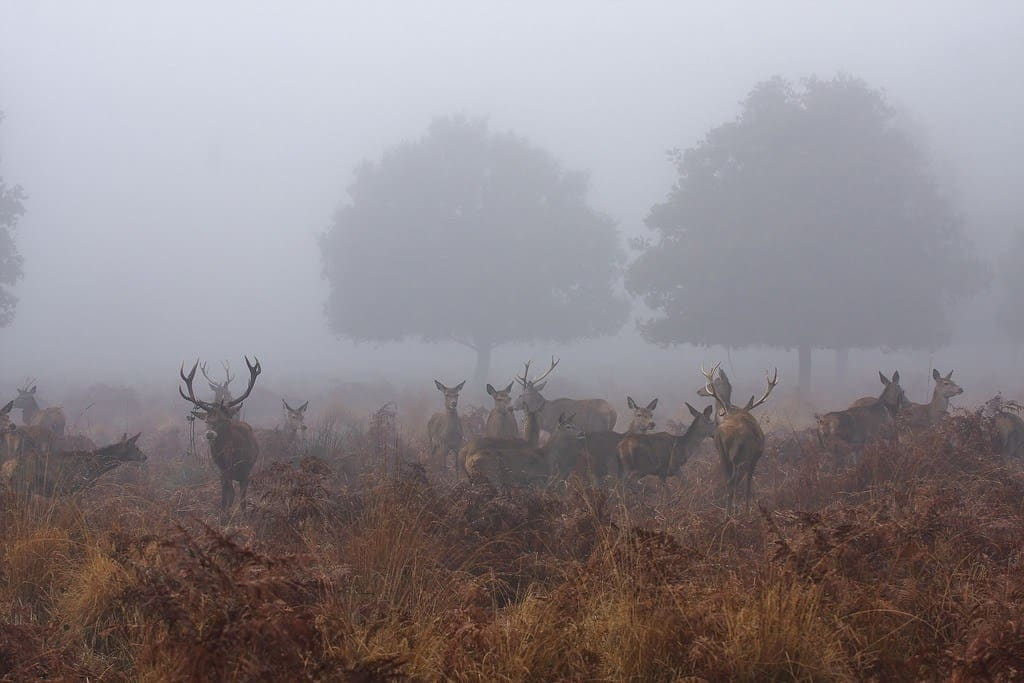 best deer hunting times louisiana