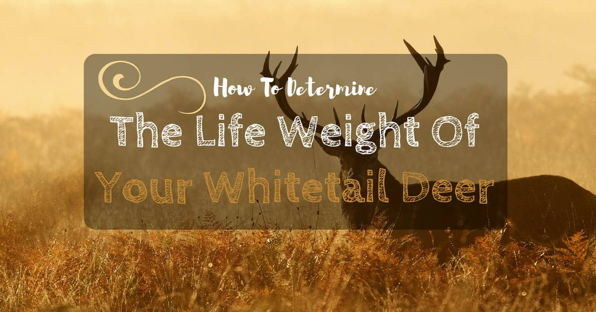 how-much-does-deer-weigh