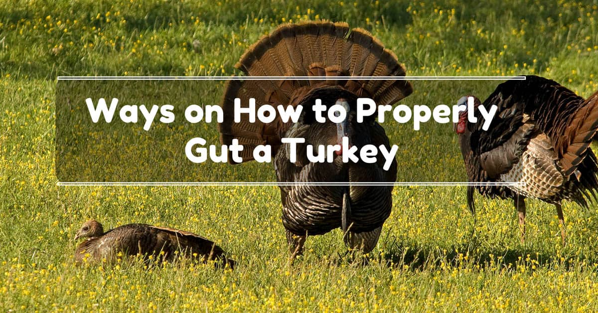 How To Gut A Turkey