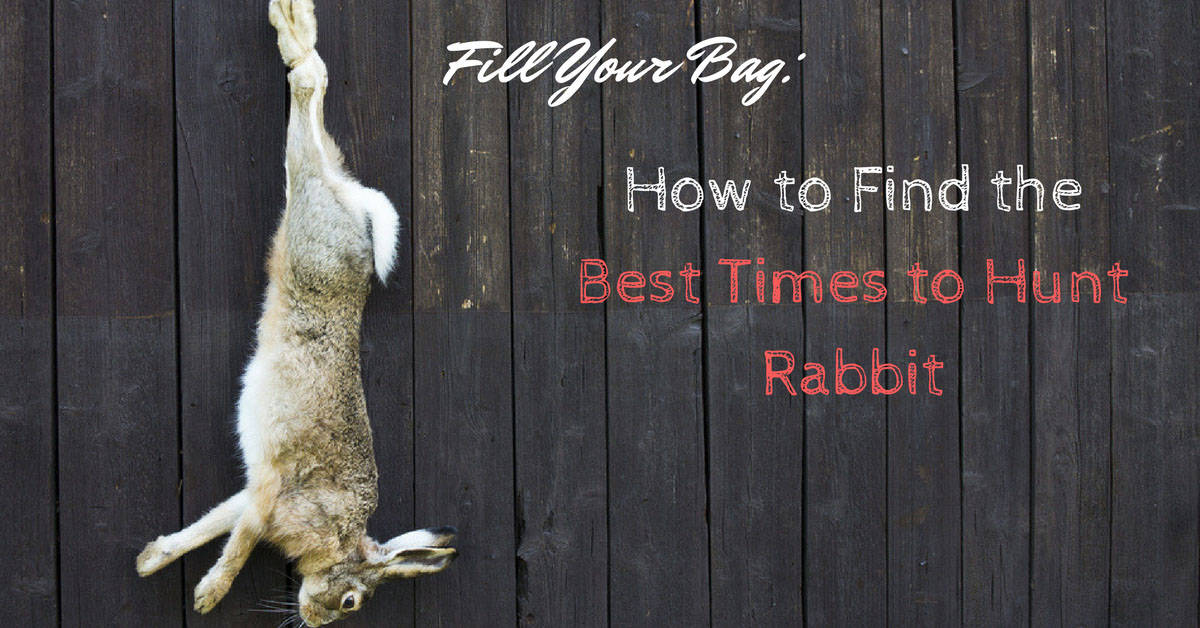 Best Times to Hunt Rabbit
