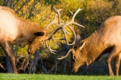 Best boot for elk Hunting