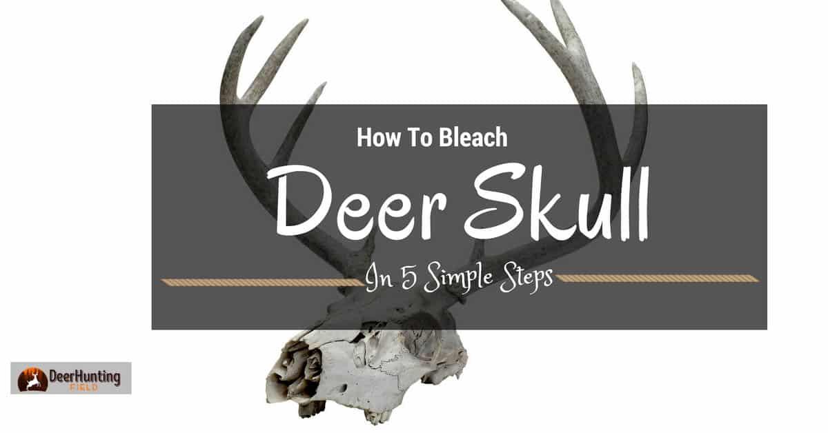 how-to-bleach-a-deer-skull
