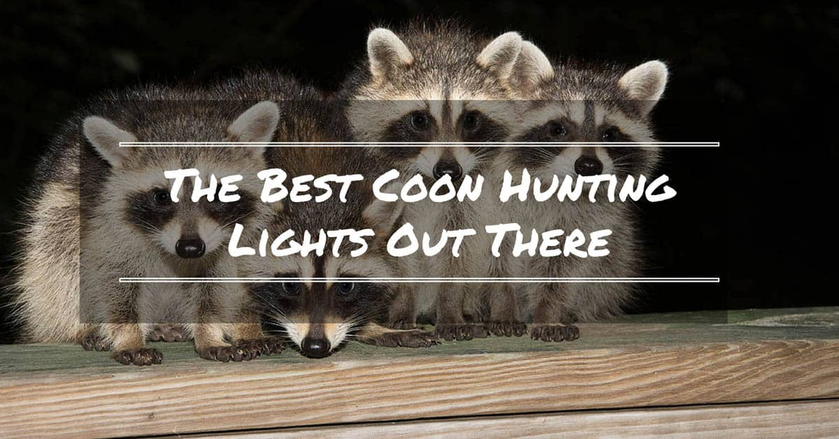 best-coon-hunting-light