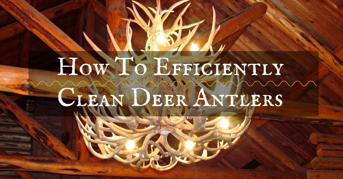 How To Efficiently Clean Deer Antlers