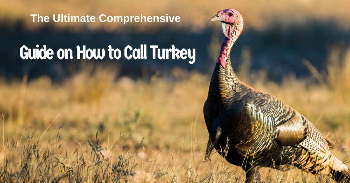 How to Call Turkey