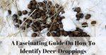 What Does Deer Poop Look Like