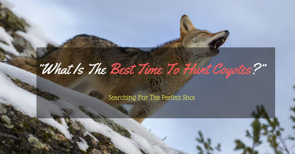 Best Time To Hunt Coyote