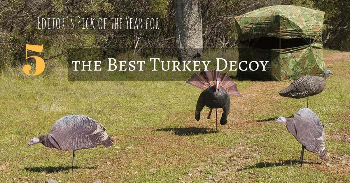 Best Turkey Decoy